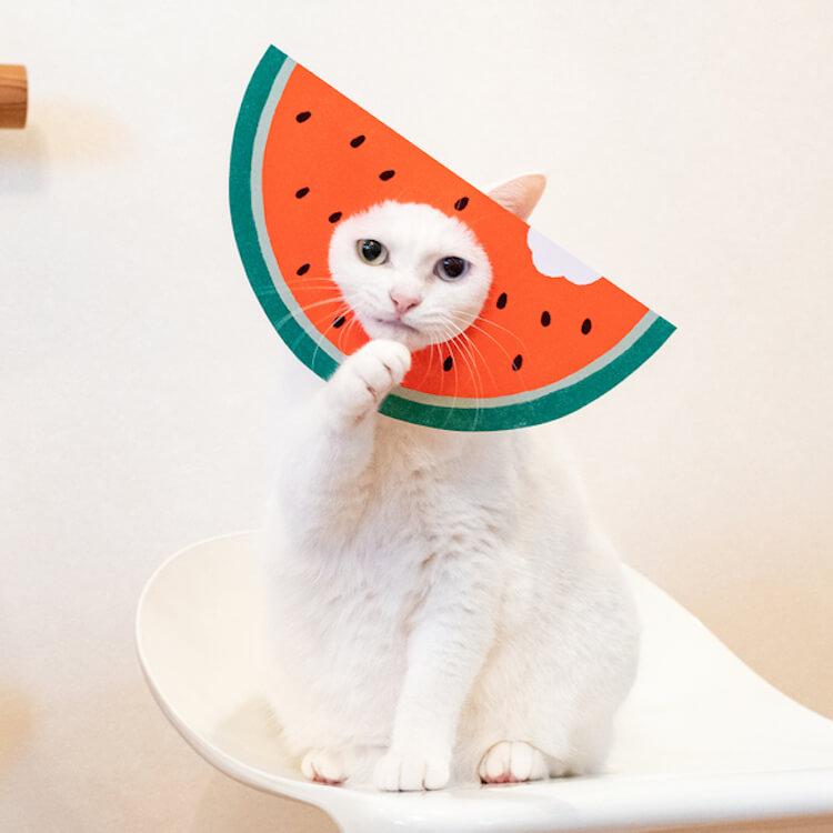猫の顔はめペーパークラフト