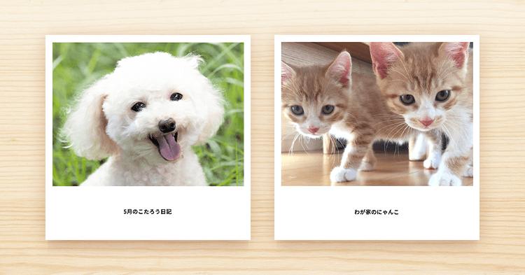 ペット表紙1 アイキャッチ 犬と猫のフォトブック