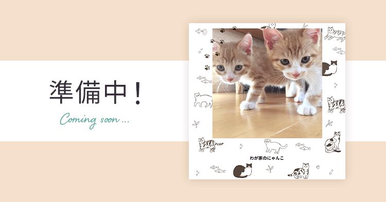 ペット表紙1 猫のフォトブック